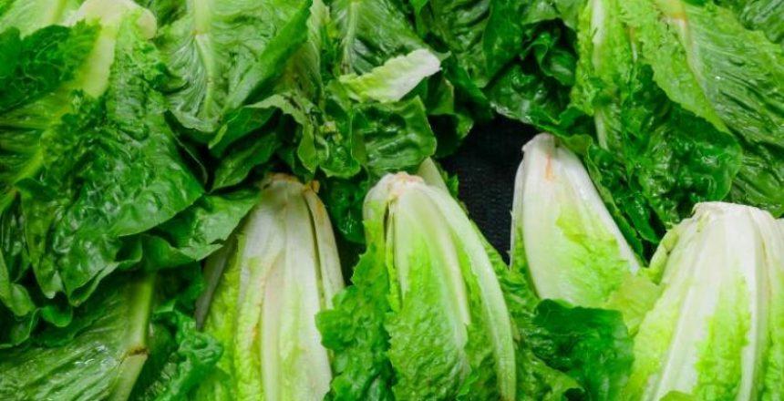 Beim Salat pflücken